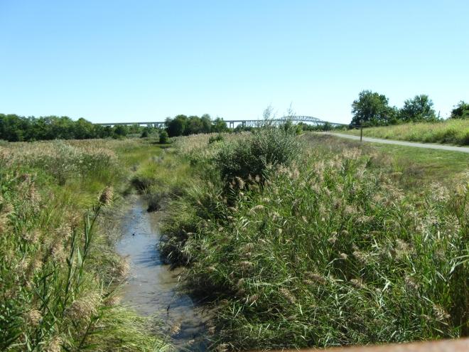 Michael Castle Trail, just outside of Delaware City DE (by Cathy Schwarz)
